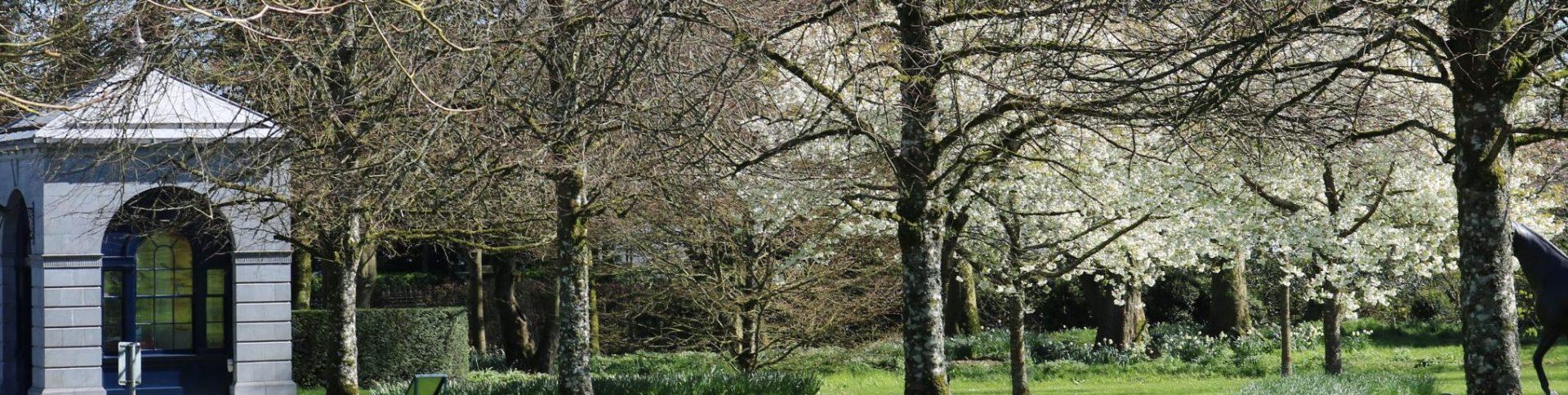 Arboricultural Association News